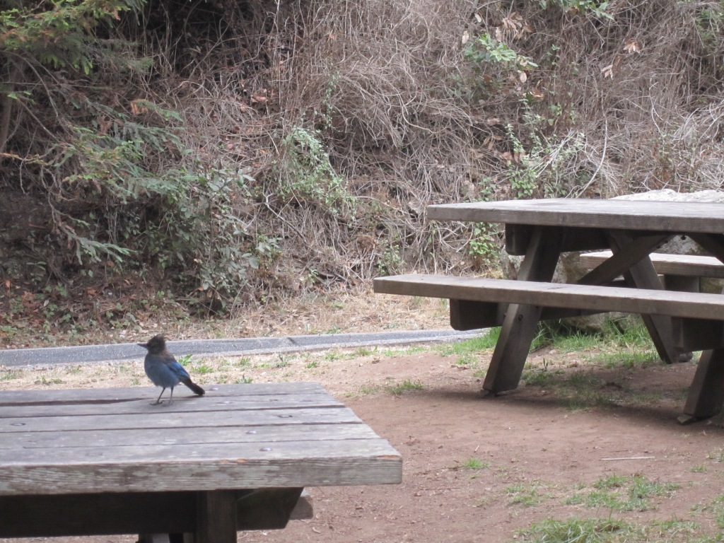 Julia Pfeiffer Burns State Park - CA